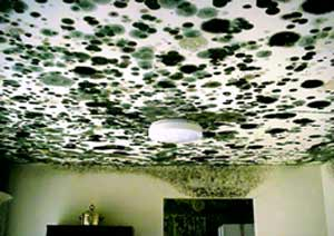 moldceiling